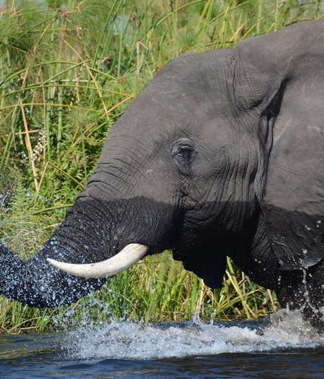 Olifant in Okavango (c) Unesco - Guy Debonnet.jpg